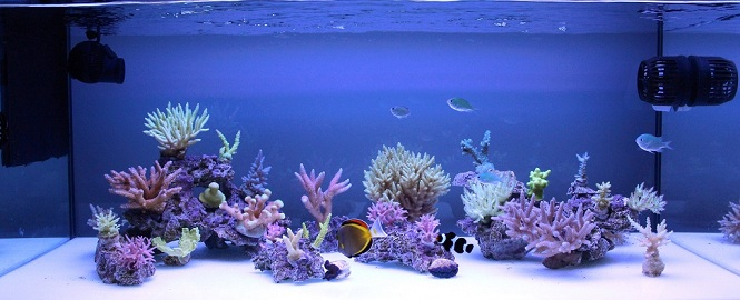 Starboard for a bb nano reef central online community for Aquarium recifal nano