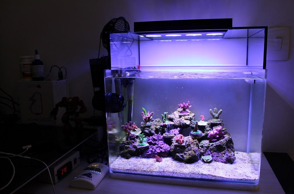 My Small 10g Sps Pico Reef Reef Central Online Community